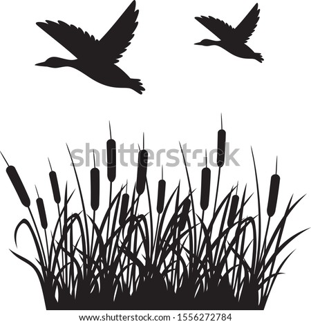 Flying mallard duck and reeds vector illustration Stockfoto ©