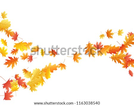 Flying oak and maple leaf abstract background seasonal vector illustration. Autumn leaves falling graphic design. Fall season specific vector illustration. Oak and maple tree dry autumn foliage.