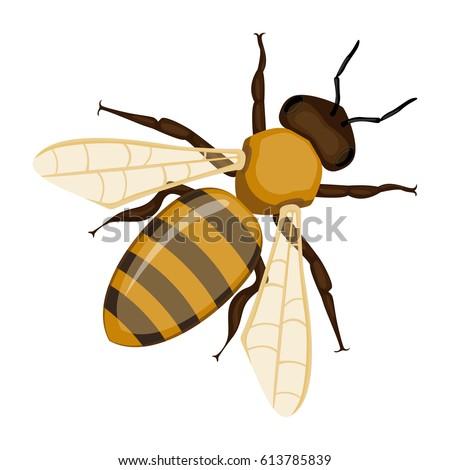 flying realistic honey bee