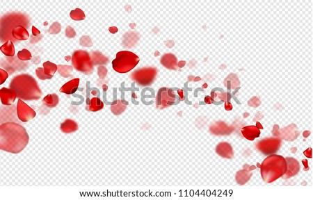 flying red rose petals on a