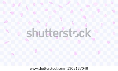 Flying rose petals. Background of flower petals. Confetti from flower petals. Pink petals of blooming cherry, sakura. Female, spring background. Greeting card design elements. Transparent background.