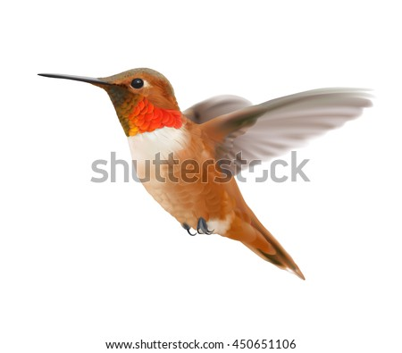 flying rufous hummingbird