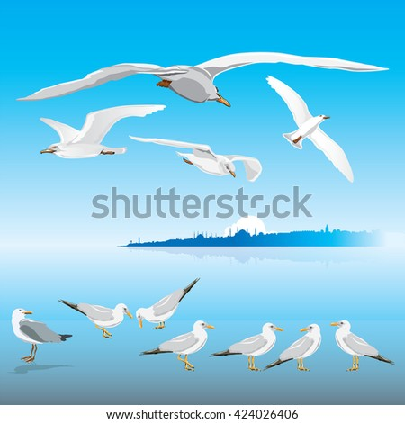 flying seagulls on istanbul