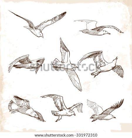 flying seagulls. set of 8...
