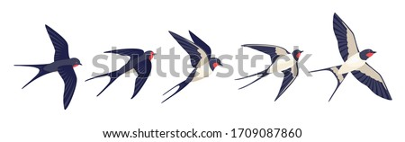 Flying swallows. Bird in flight isolated on a white background. Vector illustration in a flat style. Foto stock ©