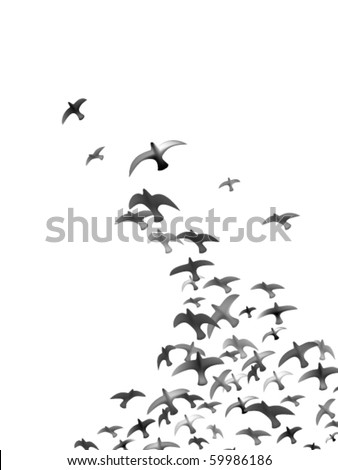 flying vector birds