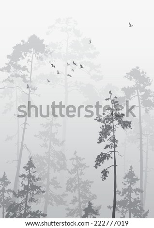foggy landscape with a flock of