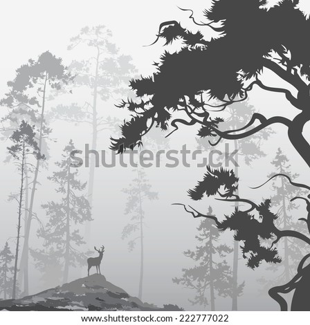 foggy landscape with silhouette