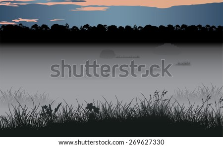 foggy swamp and wild coniferous