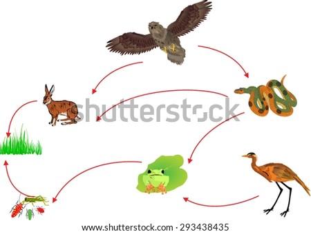 food chain biological circle of