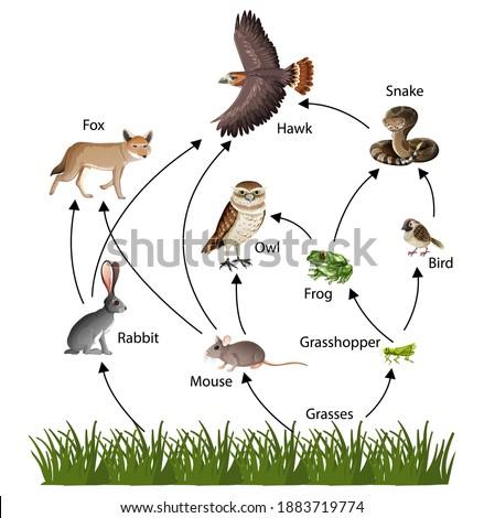 Food Chain concept diagram illustration Photo stock ©