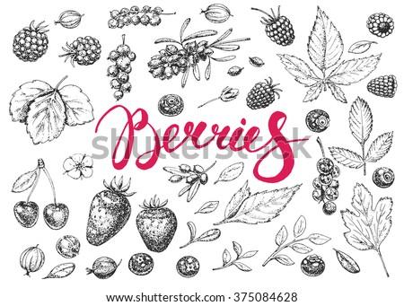 food hand drawn vector elements