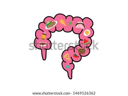 Food in large intestine. Large intestine organ of the digestive system. Human large intestine concept