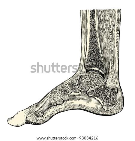 """Foot - vintage engraved illustration - """"Manuel des hospitalière et des garde-malaldes""""  edited by  Librairie Poussielgue - Paris 1907"""