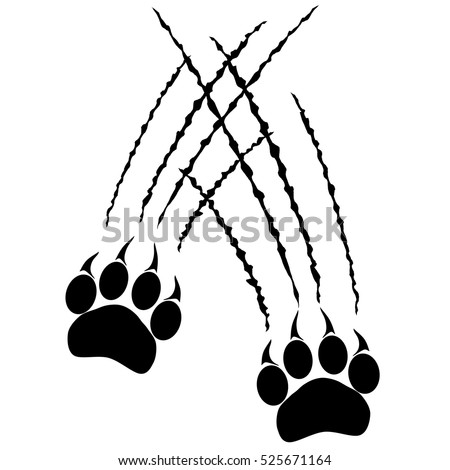 Footprints of a big cat paws. Panther or tiger traces. Vector