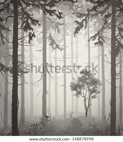 forest air landscape with birds