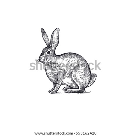 forest animal hare or rabbit....