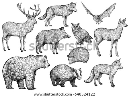 Stock Photo Forest animal illustration, drawing, engraving, ink, line art, vector