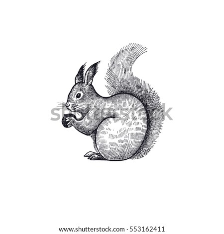 forest animal squirrel hand