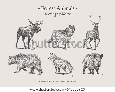 forest animals drawings set on