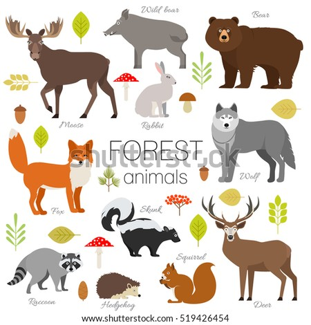 forest animals isolated vector