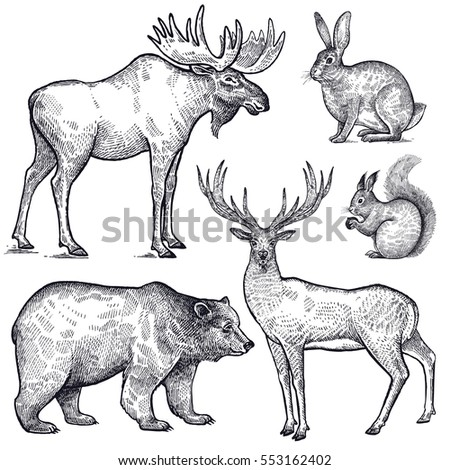 Forest animals set. Hand drawing sketch black ink isolated on white background. Vector art illustration. Vintage engraving style. Nature objects moose, deer, bear, rabbit, squirrel. Wildlife mammals.