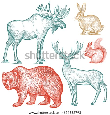 Shutterstock Forest animals set. Hand drawing sketch color ink isolated on white background. Vector art illustration. Vintage engraving style. Nature objects moose, deer, bear, rabbit, squirrel. Wildlife mammals.
