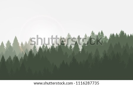 Forest background, coniferous trees. Vector illustration. Landscape with sunrise