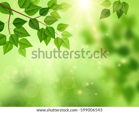 forest background with sun