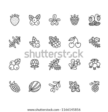 Forest berries flat line icons - blueberry, cranberry, raspberry, strawberry, cherry, rowan berry, blackberry. Watermelon, grapes, olives illustrations for natiral food store Foto stock ©