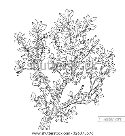 forest boxwood tree branch with