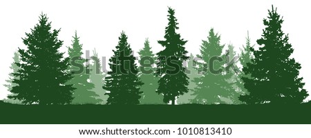 forest fir trees silhouette