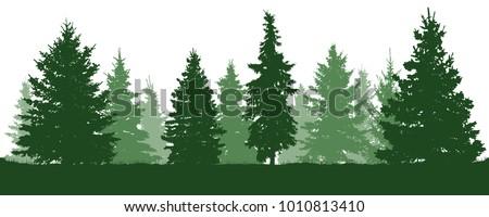 forest fir trees silhouette