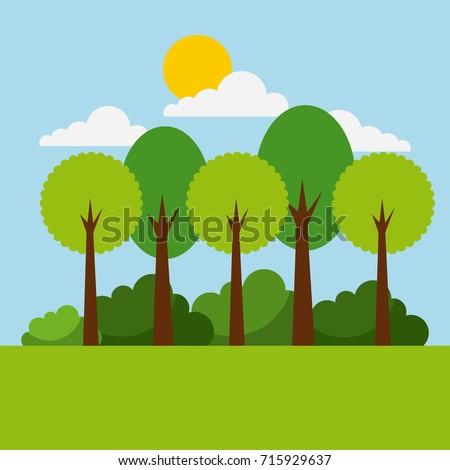 forest landscape natural