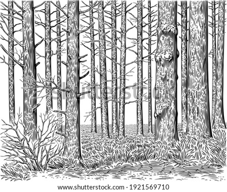 Forest landscape. Tree trunks. Art detailed editable illustration. Vector vintage engraving. Isolated on white background. 8 EPS Foto stock ©