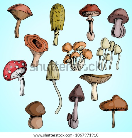 forest mushrooms  set of