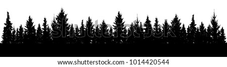 forest of christmas fir trees