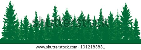 forest of fir trees silhouette