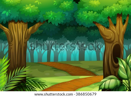 forest scene with trail in the
