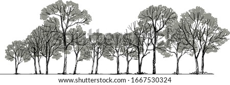 Forest Sketch ing Vector ,Tree Drawing Foto stock ©