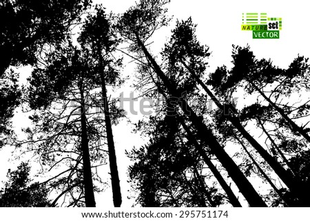 forest tree silhouettes vector