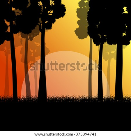 forest trees landscape sunrise
