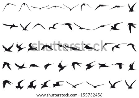 forty seven little terns flying