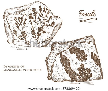 Fossilized plants, stones and minerals, crystals, prehistoric animals, archeology or paleontology. fragment fossils. engraved hand drawn in old sketch and vintage style.