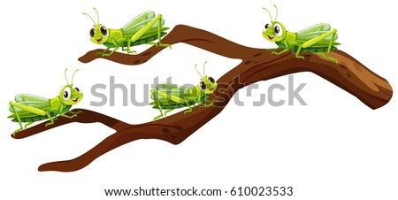 Stock Photo Four grasshoppers on branch illustration