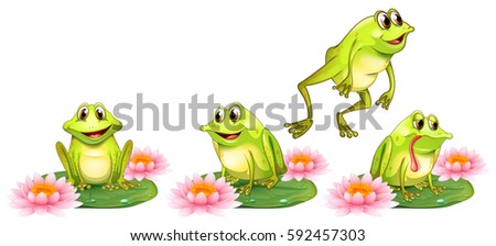 four green frogs on water lily