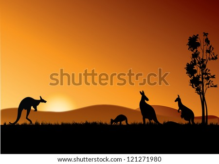 four kangaroos feeding in the