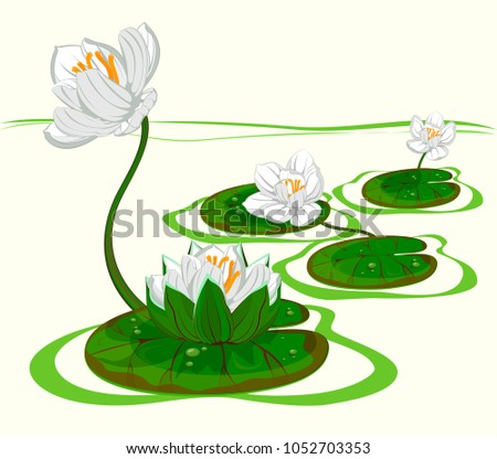 four white flowers of water