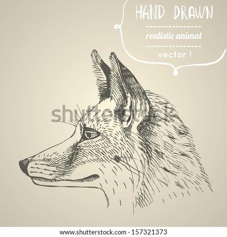 fox portrait hand drawn vector