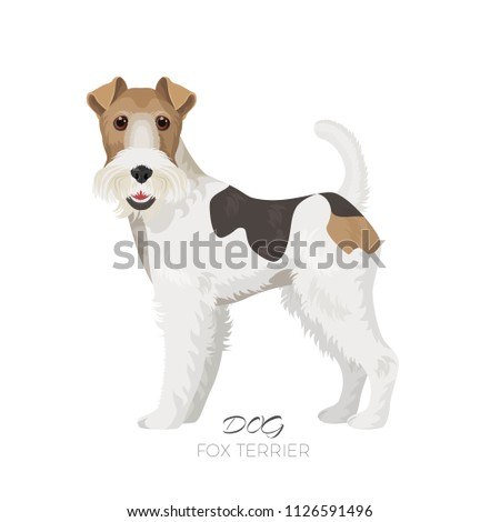 fox terrier isolated on white